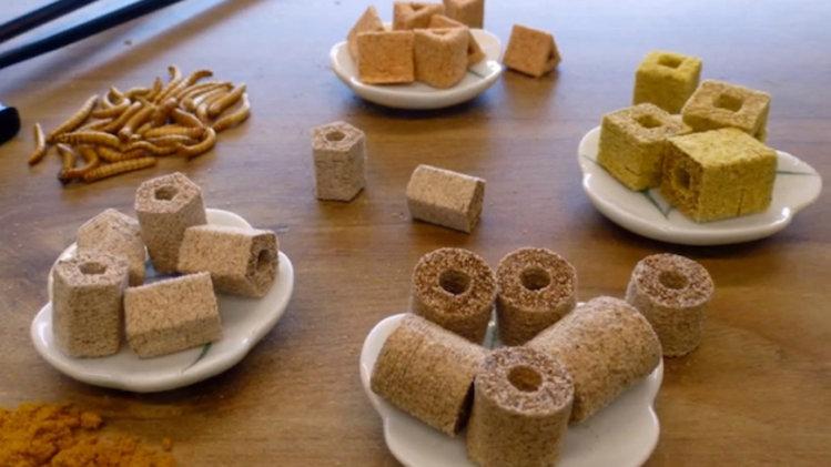 Voedsel gemaakt van meelwormen...